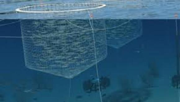 Bio-fuel and 'Integrated Multi-Trophic Aquaculture' (IMTA) – energy, food supply & a clean environment